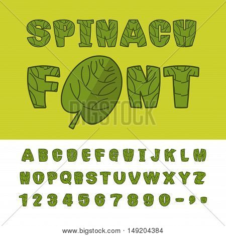 Spinach font. Useful Herbs alphabet. Green lettuce leaves alphabet. Sports dietetic food typography. Grass letters
