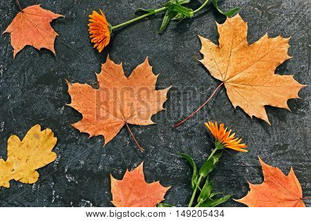 Background of fall maple leaves and flowers. Flat lay