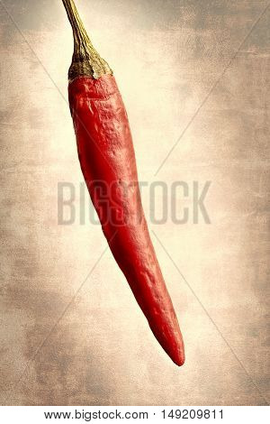 One chili pepper on a textured background