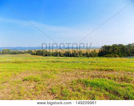 Field and deciduous forest during sunny day
