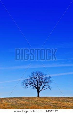 A Tree Under A Blue Sky