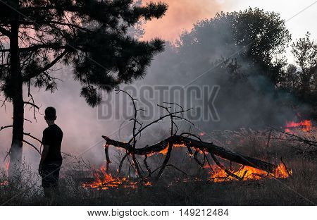 Boy in forest fire smoke watching the fire