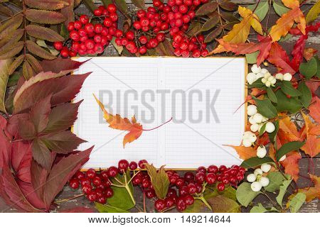 an open notebook on the background of autumn berries, flowers and leaves