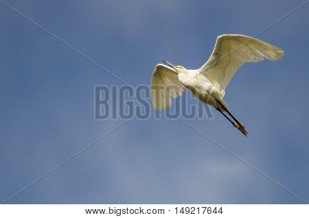 Snowy Egret Flying in a Clear Blue Sky