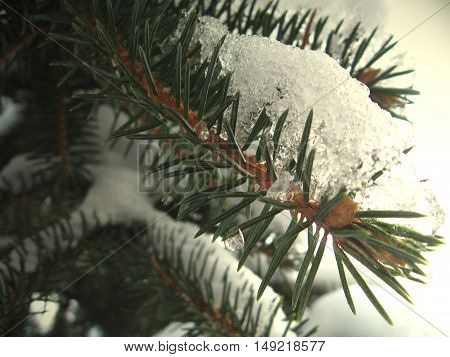 Pine branch with some snow on it