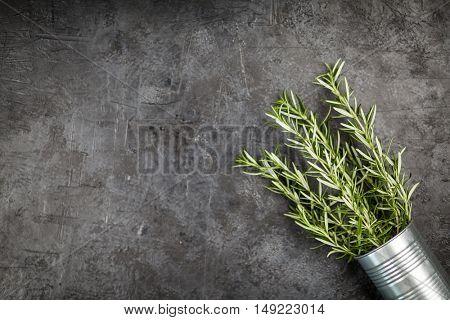 Fresh rosemary on grey background
