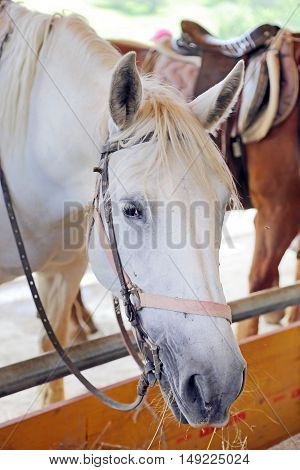 Head of horse withe in the enclosure