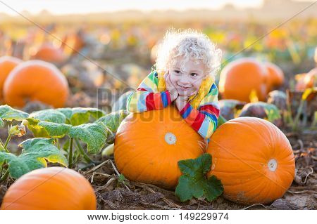 Little boy picking pumpkins on Halloween pumpkin patch. Child playing in field of squash. Kids pick ripe vegetables on a farm in Thanksgiving holiday season. Family with children having fun in autumn