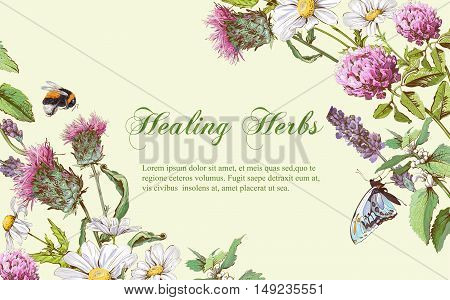 Vector wild flowers and herbs horizontal banner. Design for herbal tea, natural cosmetics, honey, health care products, homeopathy, aromatherapy. With place for text