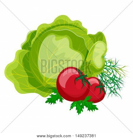 Fresh vegetables: cabbage tomatoes parsley and dill