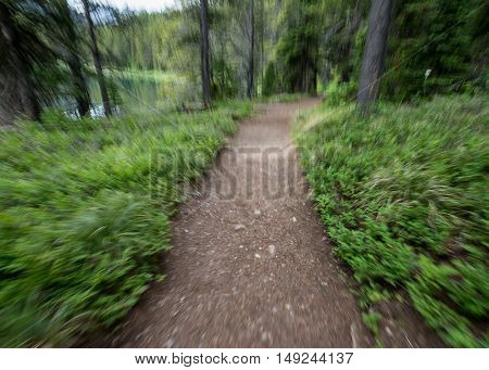 Motion Blur of Running Down Trail mimics the feeling of running through the forest
