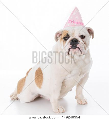 spoiled english bulldog wearing princess hat on white background