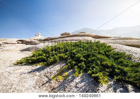 Stone Desert Landscape In Kazakhstan