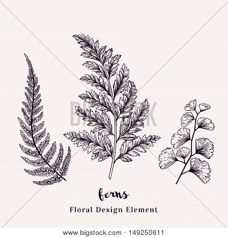 Set with ferns. Plants with leaves isolated on white background. Vector design elements. Black and white.