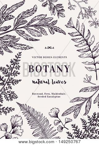 Botanical illustration with leaves. Boxwood seeded eucalyptus fern maidenhair. Engraving style. Design elements. Black and white. Vector.
