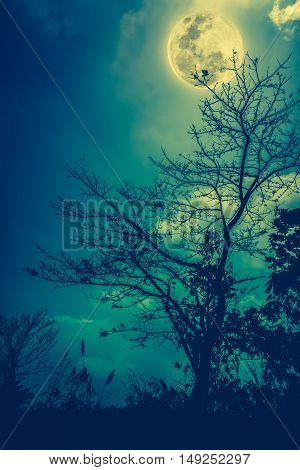 Silhouettes Of Dry Tree Against Night Sky And Bright Moon. Outdoor. Cross Process And Vintage Tone E