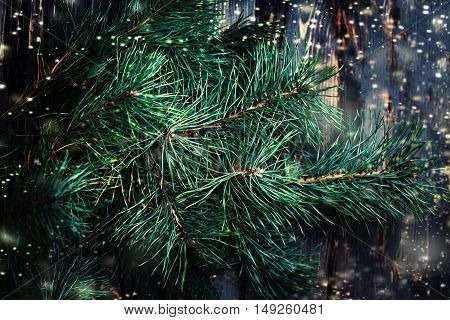 Closeup of Christmas tree branch over wooden background