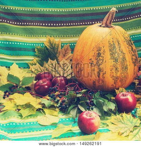 Autumn still life. Pumpkin apple and wild grapes among the fall leaf on the background of turquoise striped fabric. Toned image.