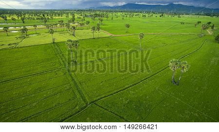 aerial view of green rice paddy field agriculture area in petchaburi thailand