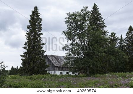 Abandoned building, barn in rural area. Meadows and trees this side. Overcast evening.