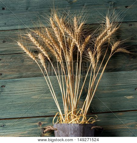 Wheat Ears on the Wooden Table. Sheaf of Wheat over Wood Background. Harvest concept