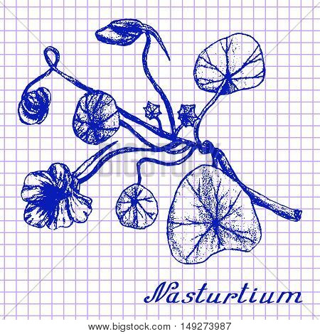 Nasturtium. Botanical drawing on exercise book background. Vector illustration. Medical herbs