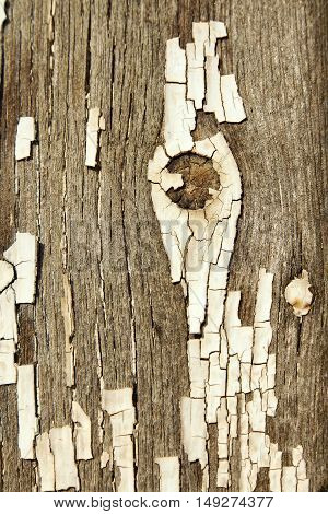 Cracked White Paint Texture On Old Wood