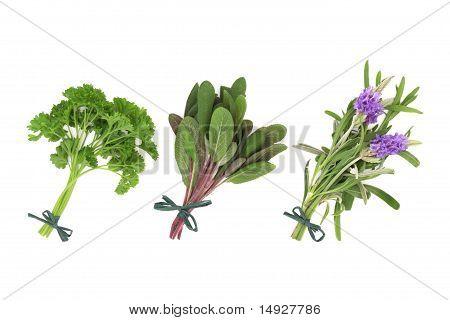 Parsley, Sage And Lavender Herbs