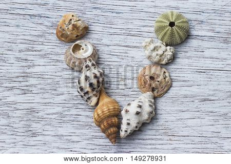 Letter V made of sea shell on antique painted wood board