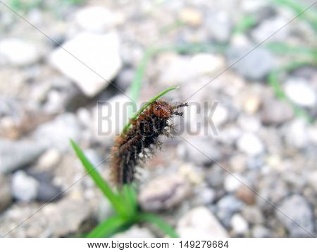 Crawling bug vertically just few centimeters from the ground