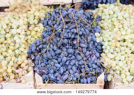 Black and green ripe grape in wooden box at harvest in Moldova