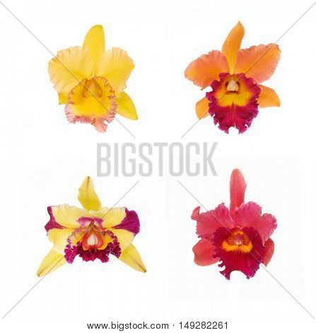 Blossoming four Orchids