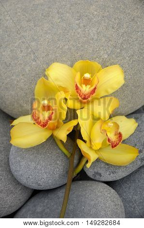 Yellow branch orchid and stones texture