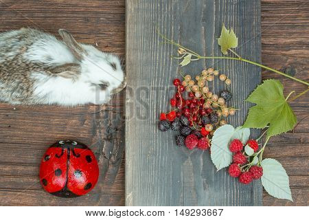 cute small fluffy rabbit or hare near baked loaf of wheat bread and cut slice on wooden board with wild berries of red and white currant blackberry strawberry and raspberry with ladybird or ladybug