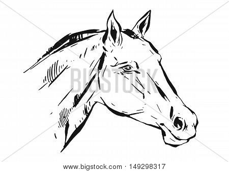 Hand drawn vector lined ink graphic horse head illustration isolated on white background.