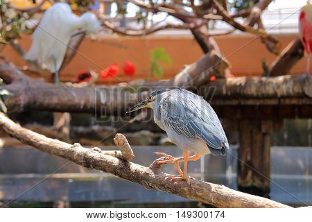 The picture was taken in Spain in the aquarium of the city of Valencia. The picture shows one of the many herons Florida.