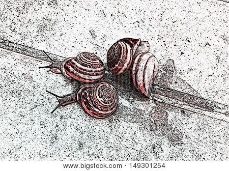 Four grape snails on the road. Illustration