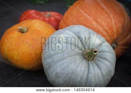 Colorful pumpkins at the autumn fair closeup