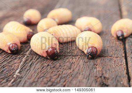 Sago beetle worm, Red palm weevil, Selective focus with shallow depth of field (Rhynchophorus ferrugineus) Popular food larva in Southern Thailand on the wooden floor