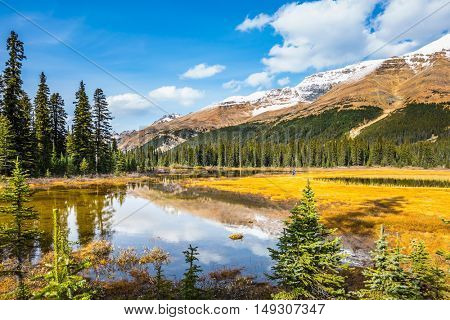 Sunny day. Waterlogged valley in the snowy Rocky Mountains. The concept of active tourism and ecotourism.  Pine trees reflected in smooth water