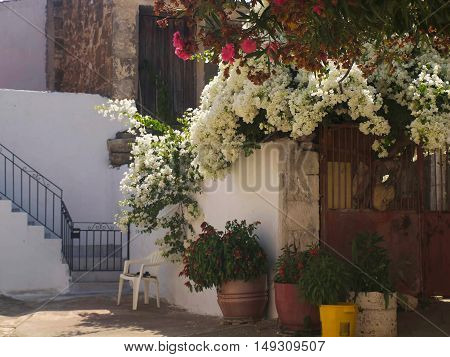 the village of Crete patio with beautiful flowers on the street