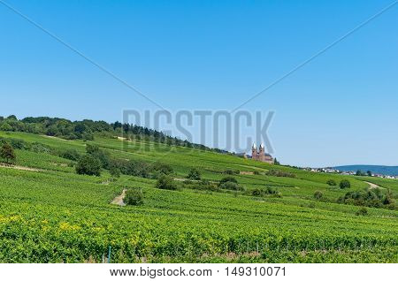 Landscape with view at vineyards and the Benedictine Abbey of St. Hildegard on a sunny summer day