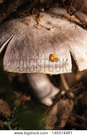 Forest mushroom in the woods this morning macro