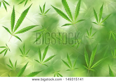 Seamless pattern of marijuana leaves on green background.