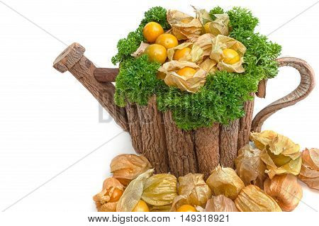 Cape Gooseberry (Physalis peruviana) in wooden pot on white background