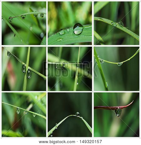Collection dew drops on grass leaves background