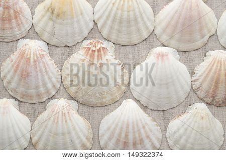Scallops on the rough textile beige sea background