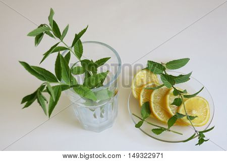 Fresh mint in a frosted glass with sliced lemon on a plain background