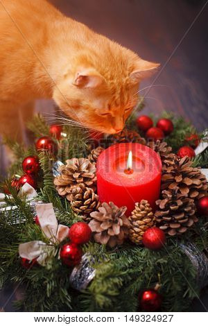 Cat sniffing a Christmas wreath with a candle a wooden table