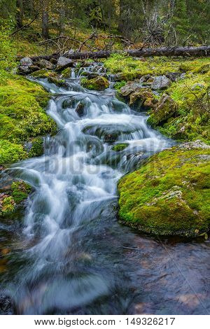 Small wild flowing stream in autumnal forest